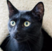 Adopt adorable kittens or cats from Metrowest Humane Society